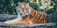 zoo dans le var